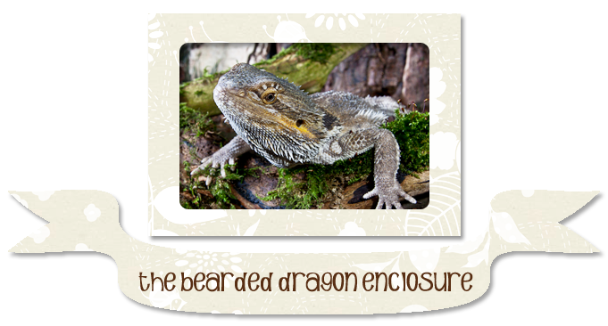 The Bearded Dragon Enclosure Oreo And Friends Oreo And